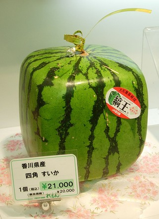 Square watermelons are smarter than round ones broken - Square watermelons how and why ...