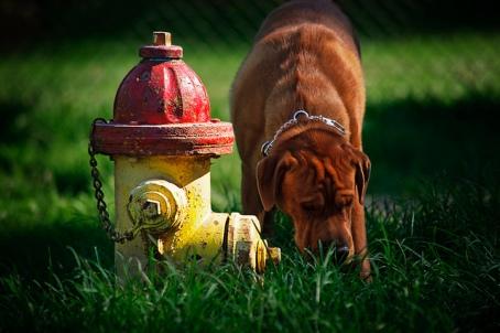 Dog Hydrant